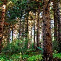 Hoyt Arboretum Best hikes in Oregon for kids