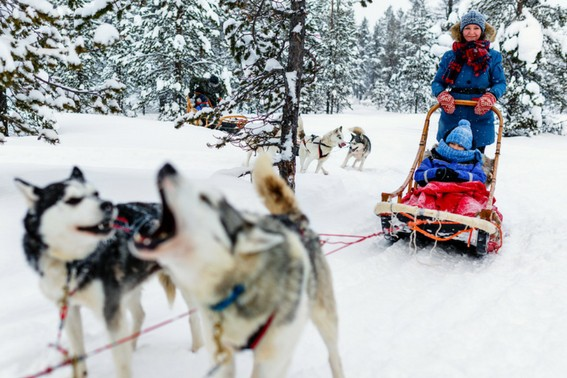 Family Dog Sledding Adventure