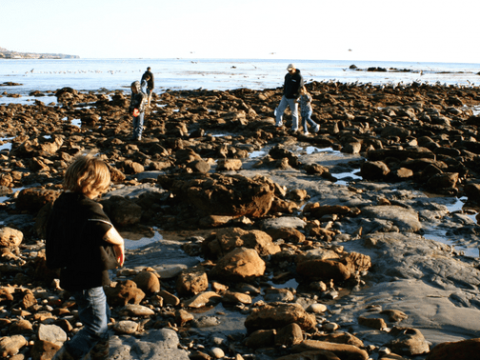 Are Tide Pools Safe? 10 Tips for Exploring Tide Pools Safely With Kids
