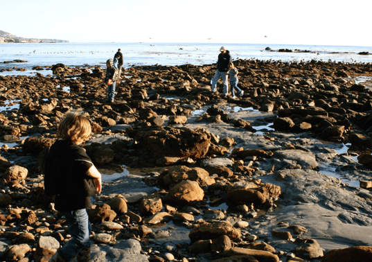 Are Tide Pools Safe? 10 Tips for Exploring Tide Pools Safely With Kids 2