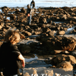 Are Tide Pools Safe? 10 Tips for Exploring Tide Pools Safely With Kids 1