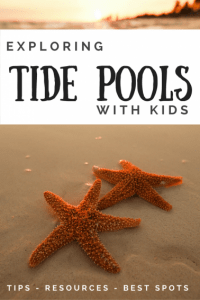 Exploring Tide Pools with kids Pinterest