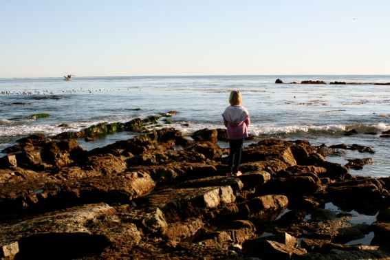 Are tide pools safe? Tips for tide pool safety