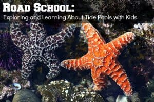 Road School Guides & Educational Tour Itineraries 2