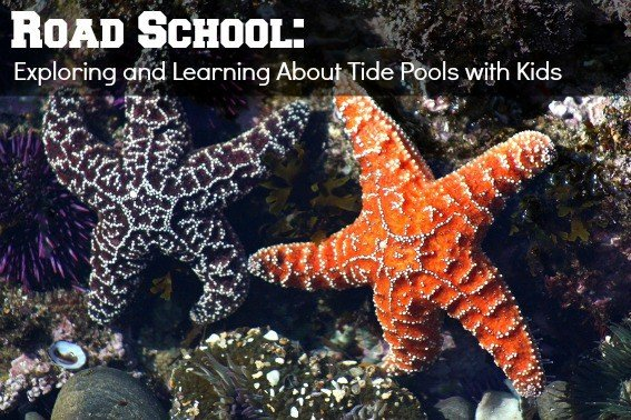 Road School: Exploring Tide Pools with Curious Kids 1