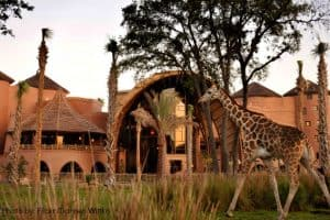 Top Kid-friendly hotels in Orlando- Disney Animal Lodge and Villas Orlando, FL