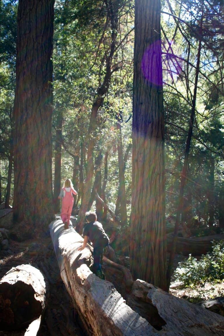 Mariposa Grove Yosemite
