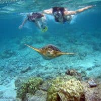 640px-Snorkelers_with_sea_turtle_(Kahaluu_Bay)