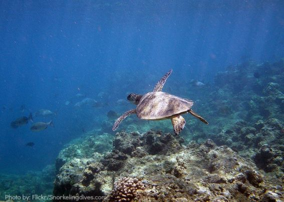 7 Great Family Friendly Snorkeling In The Hawaiian Islands Trekaroo