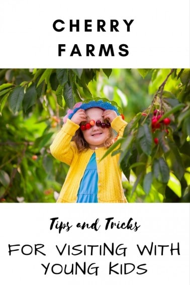 There's not much better than fruit straight from the tree. Find out what to bring, where to go, and how to prepare for an awesome trip to the cherry farms.