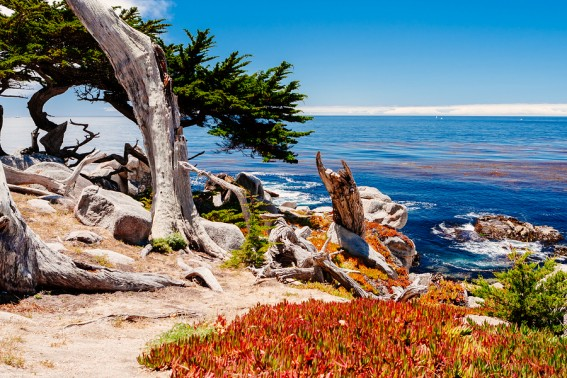 The sights along 17 mile drive
