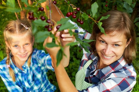 cherry farms tips and tricks for families