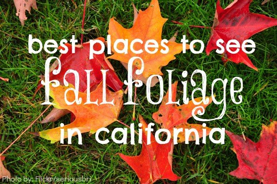 fall foliage in california