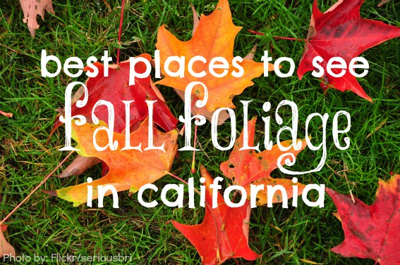 Best places to see fall foliage in california with kids