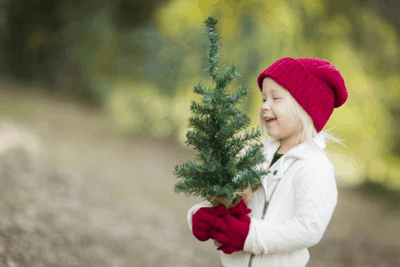 U-Cut Christmas Tree Farms: Cutting Down Your Own Tree 2