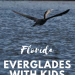 Exploring the Florida Everglades with Kids 1