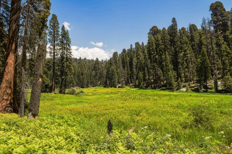 Crescent Meadow in Sequoia National Park
