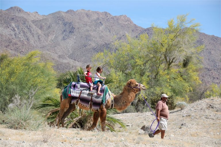 Things to do in Palm Springs with kids include visiting the Living Desert