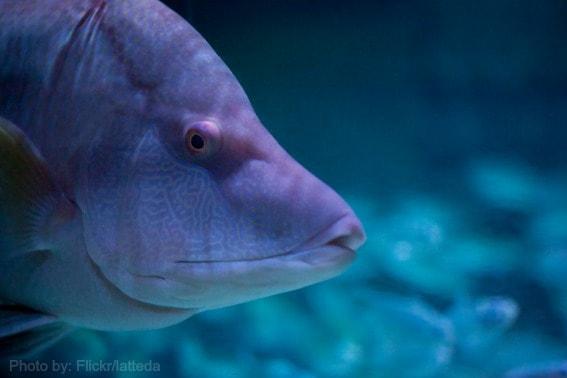 SeaLife Aquarium Grapevine
