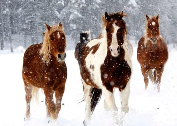 """Winter Vacation at Vista Verde Ranch; """"Mommy Travel Agent"""" Takes a Day Off"""