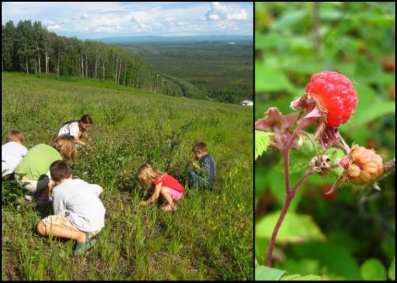 Exploring Fairbanks with Kids- Family Fun in Alaska's Interior 2