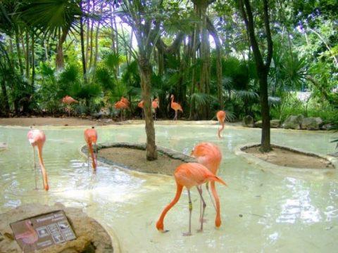 Family Trip to the Riviera Maya, Cancun