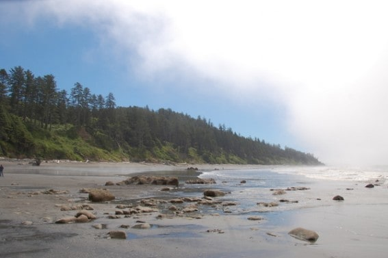 Exploring the Olympic Coast with Kids 1