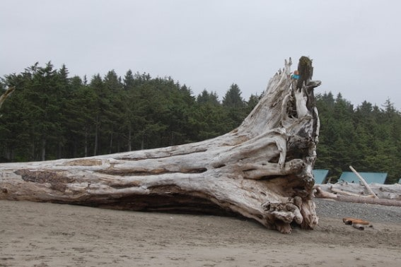 Exploring the Olympic Coast with Kids 5