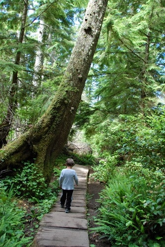 Exploring the Olympic Coast with Kids 6