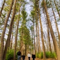 (FAMILY) Skytop Trout Stream Trail _