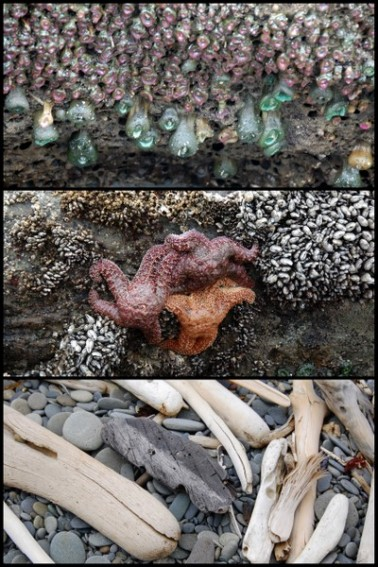 Exploring the Olympic Coast with Kids 2