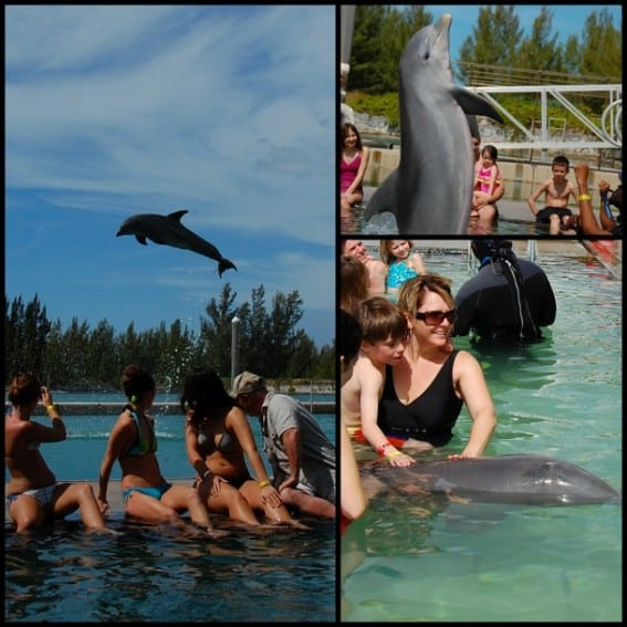 dolphin encounters for kids