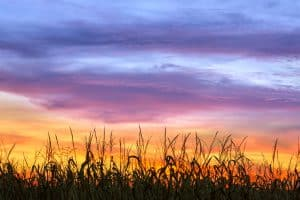 things-families-do-Indiana-cornfield-by-bigstock-Kenneth-Keifer
