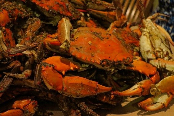 Bo Brooks Steamed Crab Old Bay Spice Baltimore Maryland Top 10 things for your family to do in Maryland