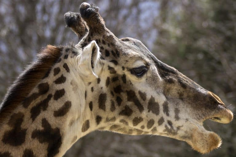 Things to do in Rhode Island with kids zoo