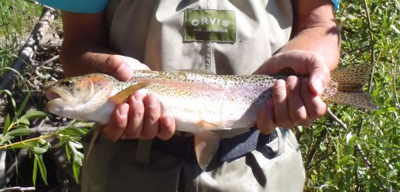 Fly fishing on the Elk River at The Home Ranch in Clark, Colorado