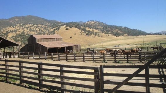 Rankin Ranch Horses