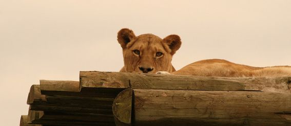Blair Drummond Safari Park Scotland