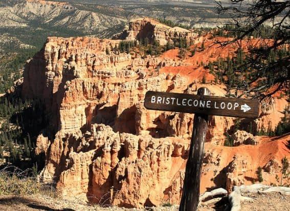 Bryce Bristlecone