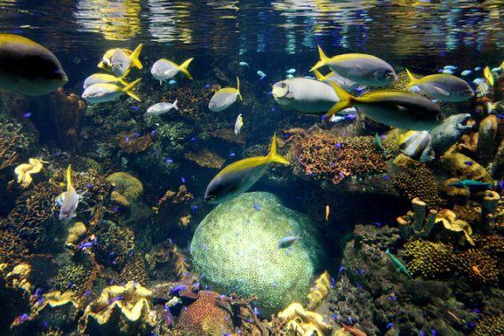 Deep Sea Aquarium Scotland