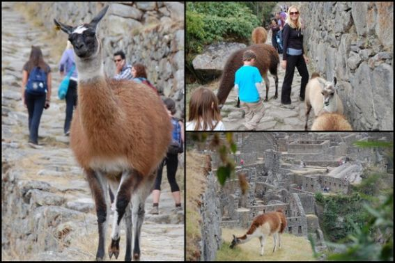 Adventures by Disney Peru 8