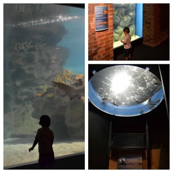Kid friendly Cleveland: Cleveland Aquarium
