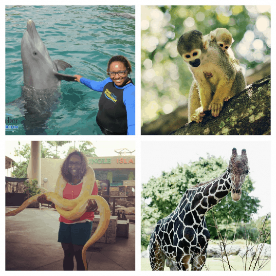 Miami with Kids Animal Attractions