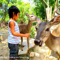 Cancun with Kids: Feeding deer at Crococun Zoo