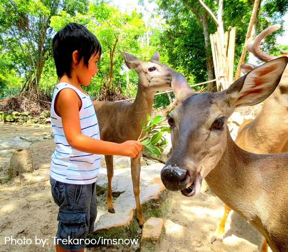Cancun with Kids: Feeding deer at Crococun Zoo