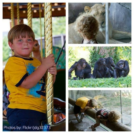 Kansas City Zoo Kid Friendly Attraction Reviews