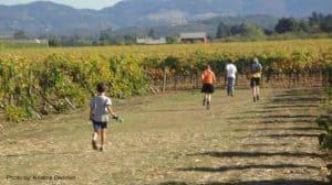 Kid Friendly Wineries in Napa Valley
