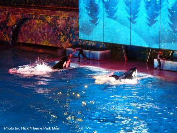 Holidays at Theme Parks: Shamu's Miracle Florida