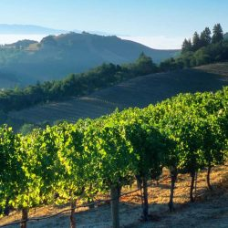 10 Fun Things to do in Napa with Kids