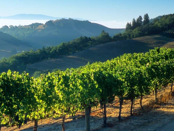things to do in Napa with kids